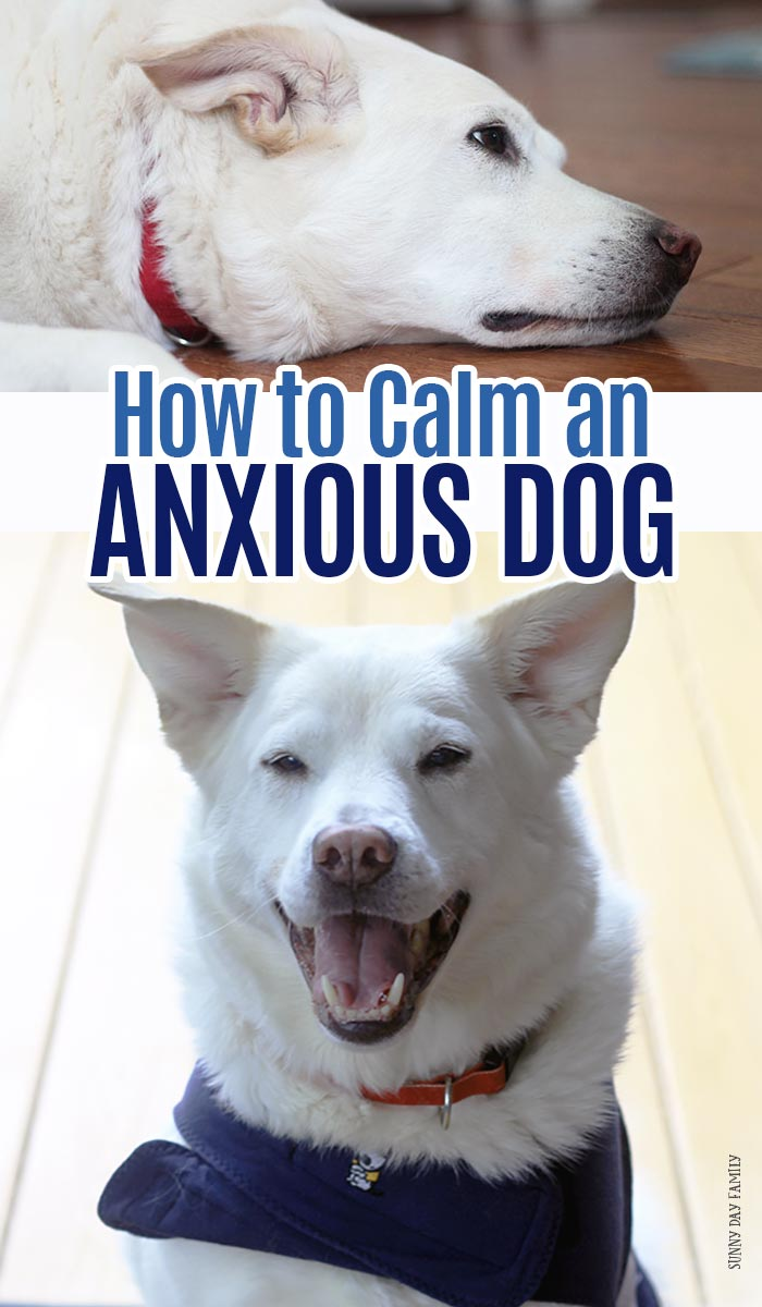 Help calm your anxious dog with these gentle strategies that really work! Help for dogs scared of thunderstorms, dogs scared of fireworks, dogs with separation anxiety, dogs with stranger anxiety, and more. Calming techniques for dogs that really work. #dogmom #dogtraining #doghealth #dogownertips