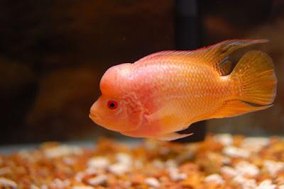 Jual Ikan Louhan si  Ikan yang Cerdas,  Harga Ikan Louhan si  Ikan yang Cerdas,  Toko Ikan Louhan si  Ikan yang Cerdas,  Diskon Ikan Louhan si  Ikan yang Cerdas,  Beli Ikan Louhan si  Ikan yang Cerdas,  Review Ikan Louhan si  Ikan yang Cerdas,  Promo Ikan Louhan si  Ikan yang Cerdas,  Spesifikasi Ikan Louhan si  Ikan yang Cerdas,  Ikan Louhan si  Ikan yang Cerdas Murah,  Ikan Louhan si  Ikan yang Cerdas Asli,  Ikan Louhan si  Ikan yang Cerdas Original,  Ikan Louhan si  Ikan yang Cerdas Jakarta,  Jenis Ikan Louhan si  Ikan yang Cerdas,  Budidaya Ikan Louhan si  Ikan yang Cerdas,  Peternak Ikan Louhan si  Ikan yang Cerdas,  Cara Merawat Ikan Louhan si  Ikan yang Cerdas,  Tips Merawat Ikan Louhan si  Ikan yang Cerdas,  Bagaimana cara merawat Ikan Louhan si  Ikan yang Cerdas,  Bagaimana mengobati Ikan Louhan si  Ikan yang Cerdas,  Ciri-Ciri Hamil Ikan Louhan si  Ikan yang Cerdas,  Kandang Ikan Louhan si  Ikan yang Cerdas,  Ternak Ikan Louhan si  Ikan yang Cerdas,  Makanan Ikan Louhan si  Ikan yang Cerdas,  Ikan Louhan si  Ikan yang Cerdas Termahal,  Adopsi Ikan Louhan si  Ikan yang Cerdas,  Jual Cepat Ikan Louhan si  Ikan yang Cerdas,