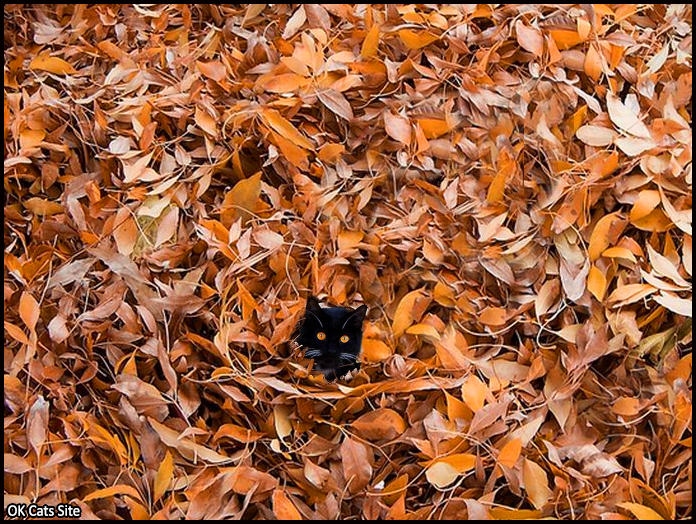 Photoshopped Cat picture •  Funny Cat fucking likes to chill under fall autumn leaves