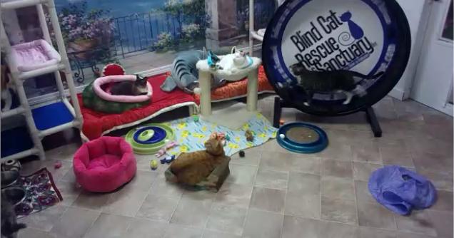 Blind Cat Rescue And Sanctuary 01 03 2014