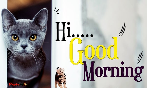 good-morning-funny-cat-cute-Funny-good-morning-animals-photos-Images-greetings-meme-free-download-6