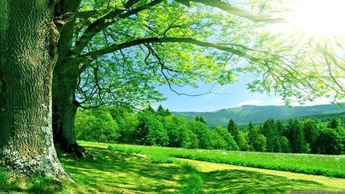 silence-nature.jpg