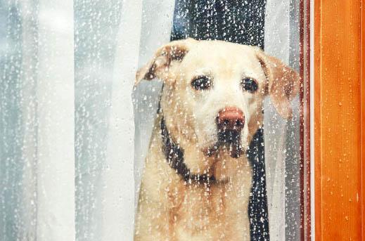 Co robić,gdy pies boi się burzy?