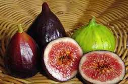 Seperti spa cara mengobati penyakit ambeien dengan cara alami dengan buah ara