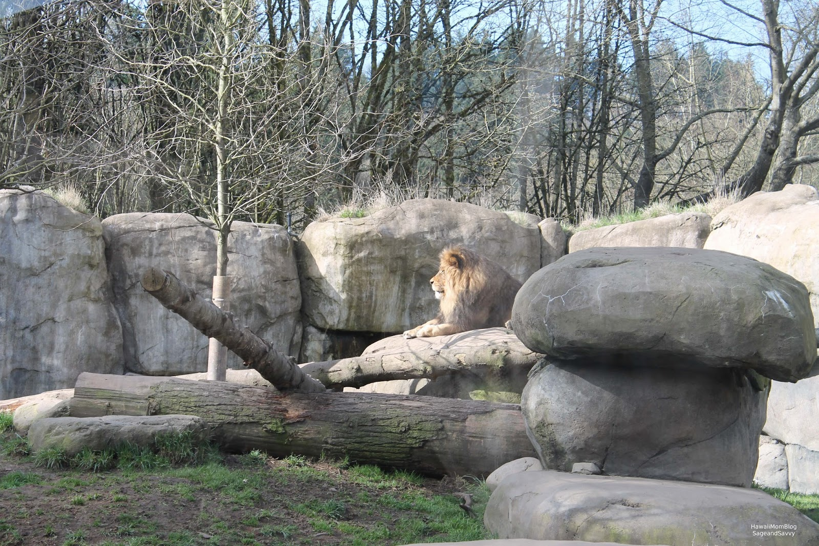 video portland zoo - HD1600×1066