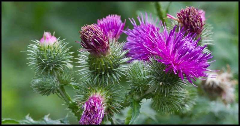 Herbs For Better Liver Health