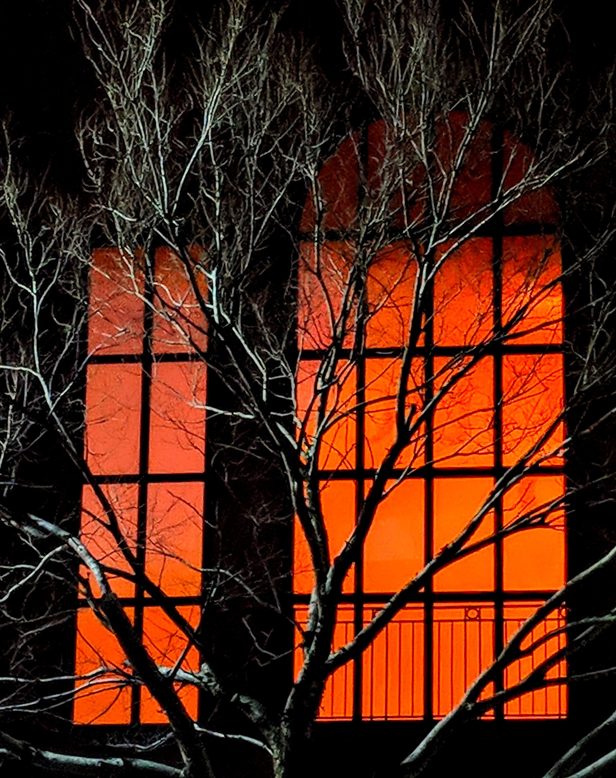 Winter tree against an orange lit window