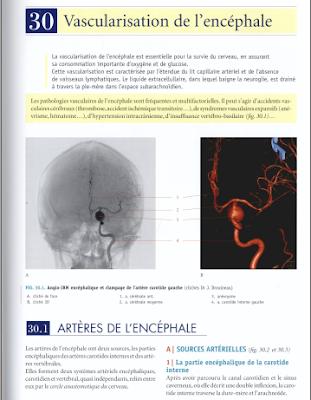 Télécharger Livre Gratuit Vascularisation de l'encéphale pdf