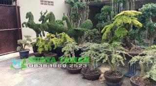 Jual bonsai - SuryaTaman