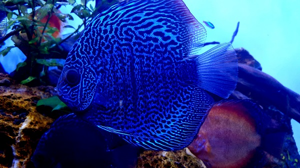 Most Profitable Fish for Breeding & Selling