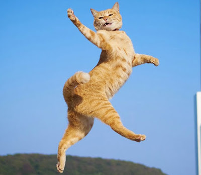 Hal Tentang Kucing