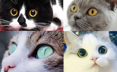 Lo que dicen los ojos de los gatos