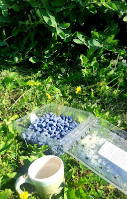 A punnet of haskap berries and a cup of tea in the grass