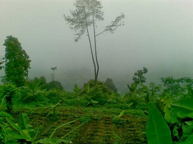 Foto(5218) Jual Tanah Milik | Kebun 23 Ha, Lokasi Puncak jual tanah di puncak