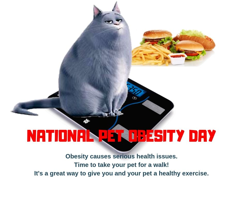 National Pet Obesity Day Wishes Photos