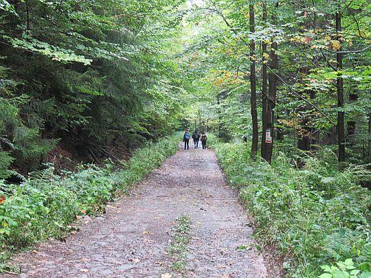 Droga w Dolinie Kamienicy.
