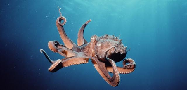 Moluscos, pulpo y biologia