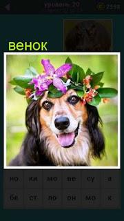 изображение собаки на голове которой венок из цветов 20 уровень 667 слов