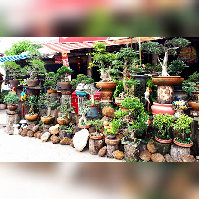 Bonsai bonanza at this store front