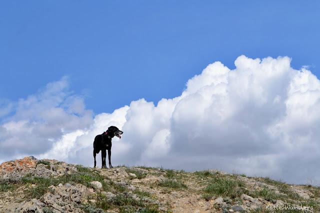 Olive hiking