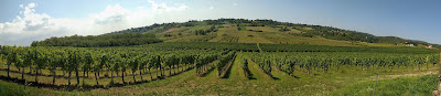 Vinograd Hopovo