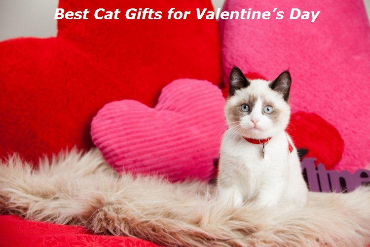 is your girlfriend a cat lover the best gifts to give her this
