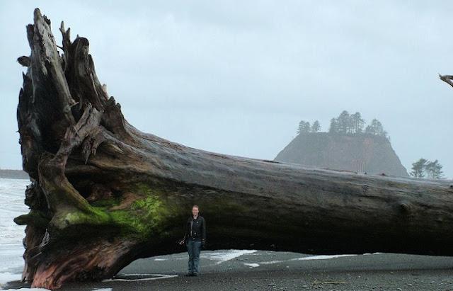 Um tronco na praia