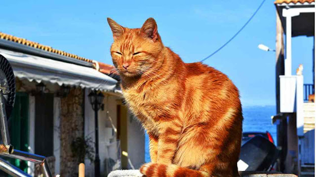 Did you know that cats have an island in Japan?
