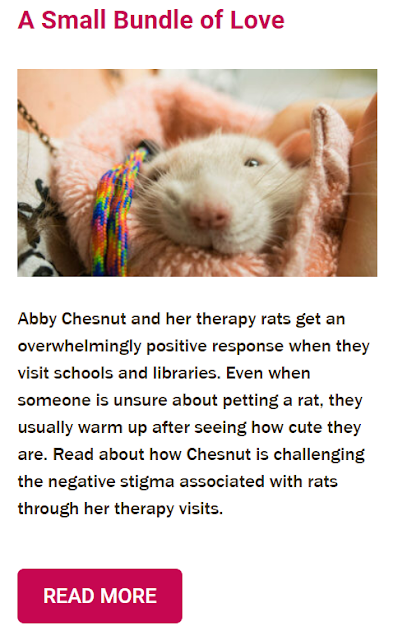 Pet Partners' Featured Teams Featuring Oliver the Therapy Rat