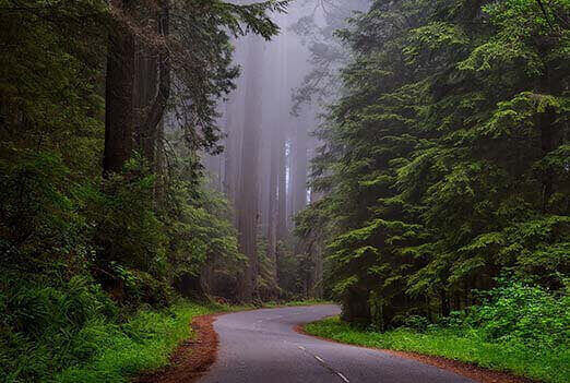 The Road not Taken by Robert Frost full text