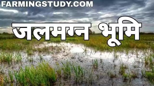 जल भराव किसे कहते है, जलमग्न भूमि किसे कहते है, waterlogged soil in hindi, waterlogging in hindi, पौधों पर जलमग्नता के कारण एवं कुप्रभाव, दलदली भूमि किसे कहते है