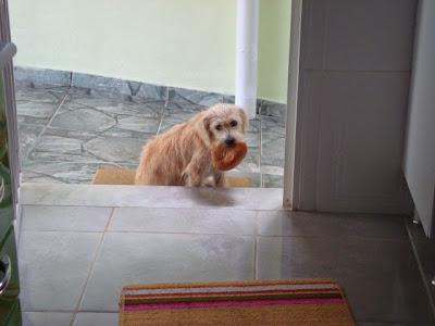 Vida de cão - fotos diversas