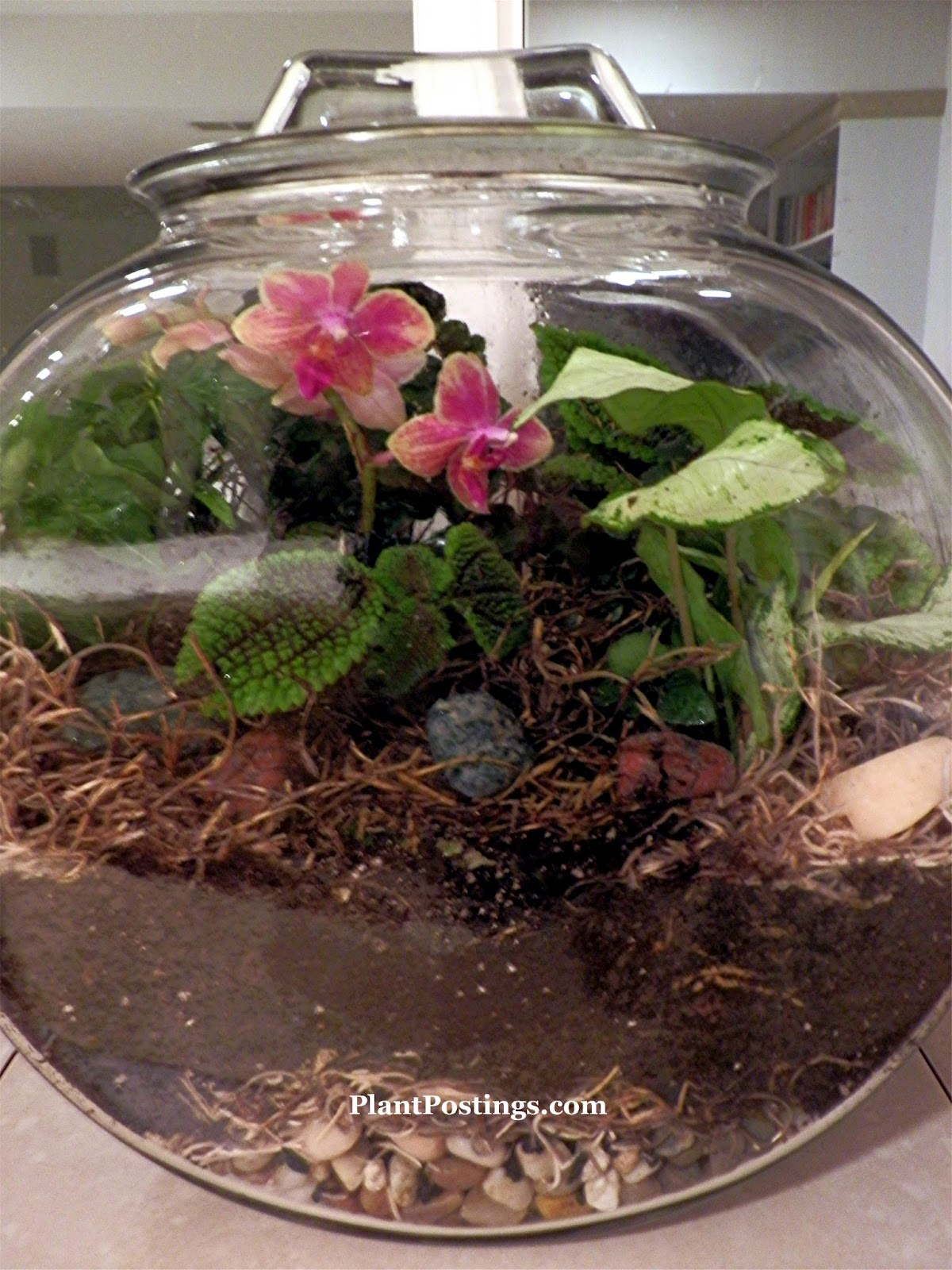 Plantpostings a terrarium for every room for My bhg greenhouse