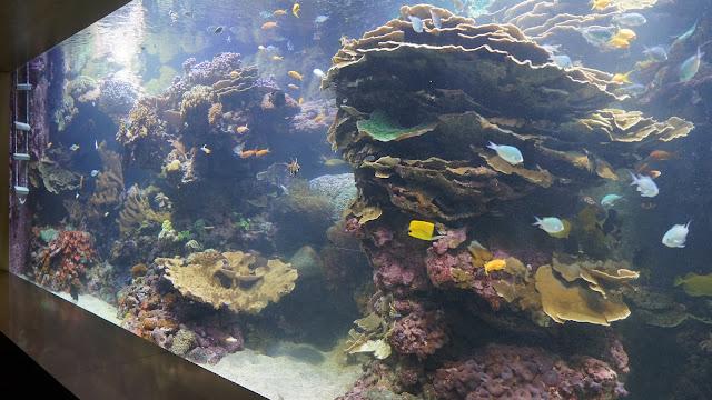 Corales vivos