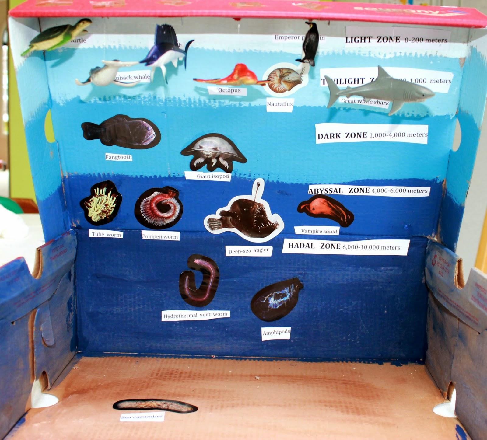 Picture Of The Ocean Zones