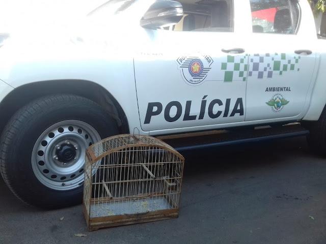 Polícia Ambiental resgata aves silvestres mantidas irregularmente em cativeiros em cidades do Oeste Paulista