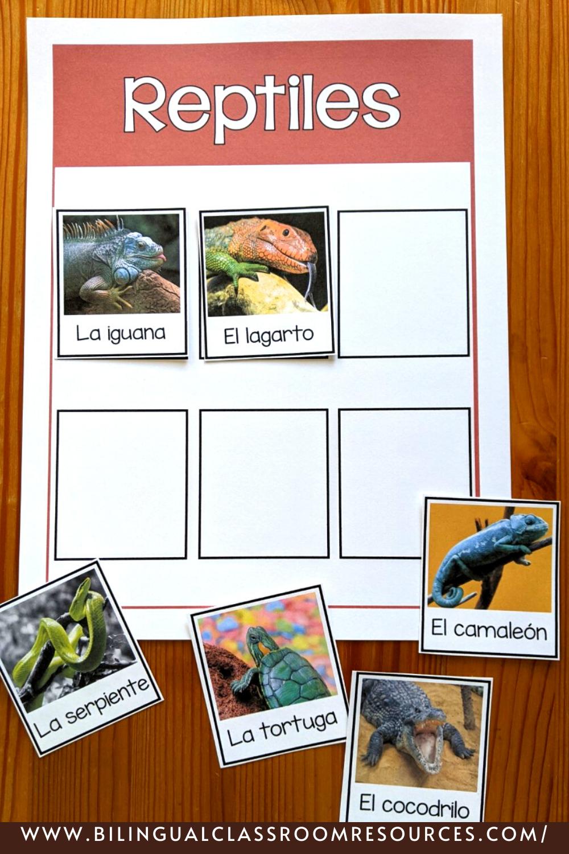 Animal Classification Sort in Spanish- Clasificación de animales- reptiles