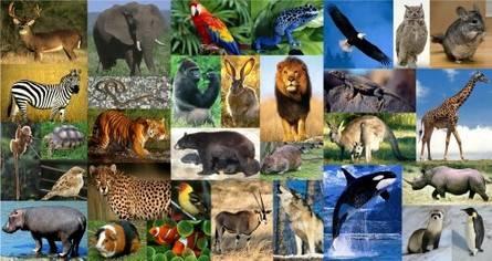 Nama-Nama Hewan dan Binatang