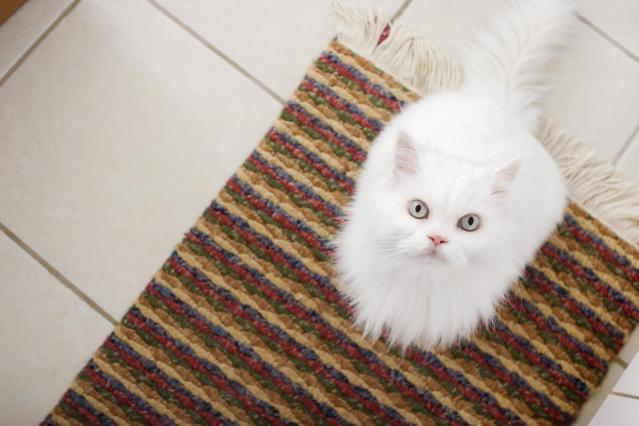 Mengatasi Kucing Pipis Sembarangan