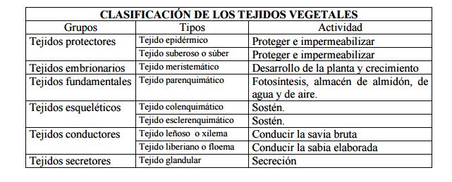 Tejidos vegetales marco teorico for Plantas fundamentales