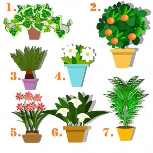Растение, выбранное вами, раскроет ваш самый большой талант