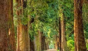 Pohon sebagai suatu kesatuan memiliki bagian-bagian yang penting. Bagian-bagian penting yang terdapat pada pohon tersebut menurut Dumanauw (1990) terdiri dari akar, batang, cabang, ranting, dan daun. Kelima bagian pohon tersebut merupakan bagian yang harus ada dan terdapat di dalam satu pohon.
