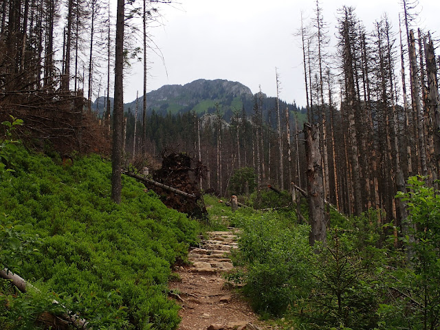 Od doliny Kościeliskiej w stronę Iwaniackiej Przełęczy