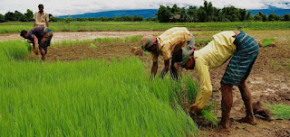 AGRICULTURE RESEARCH FUNDING farmers