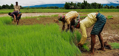 FG approves ``Green Alternative'' policy towards diversified economy 3