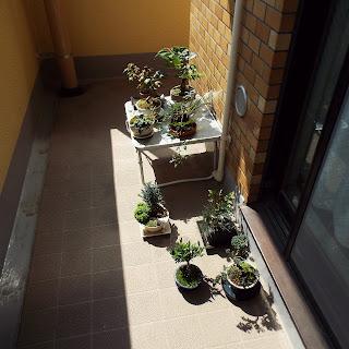 ベランダで日光浴