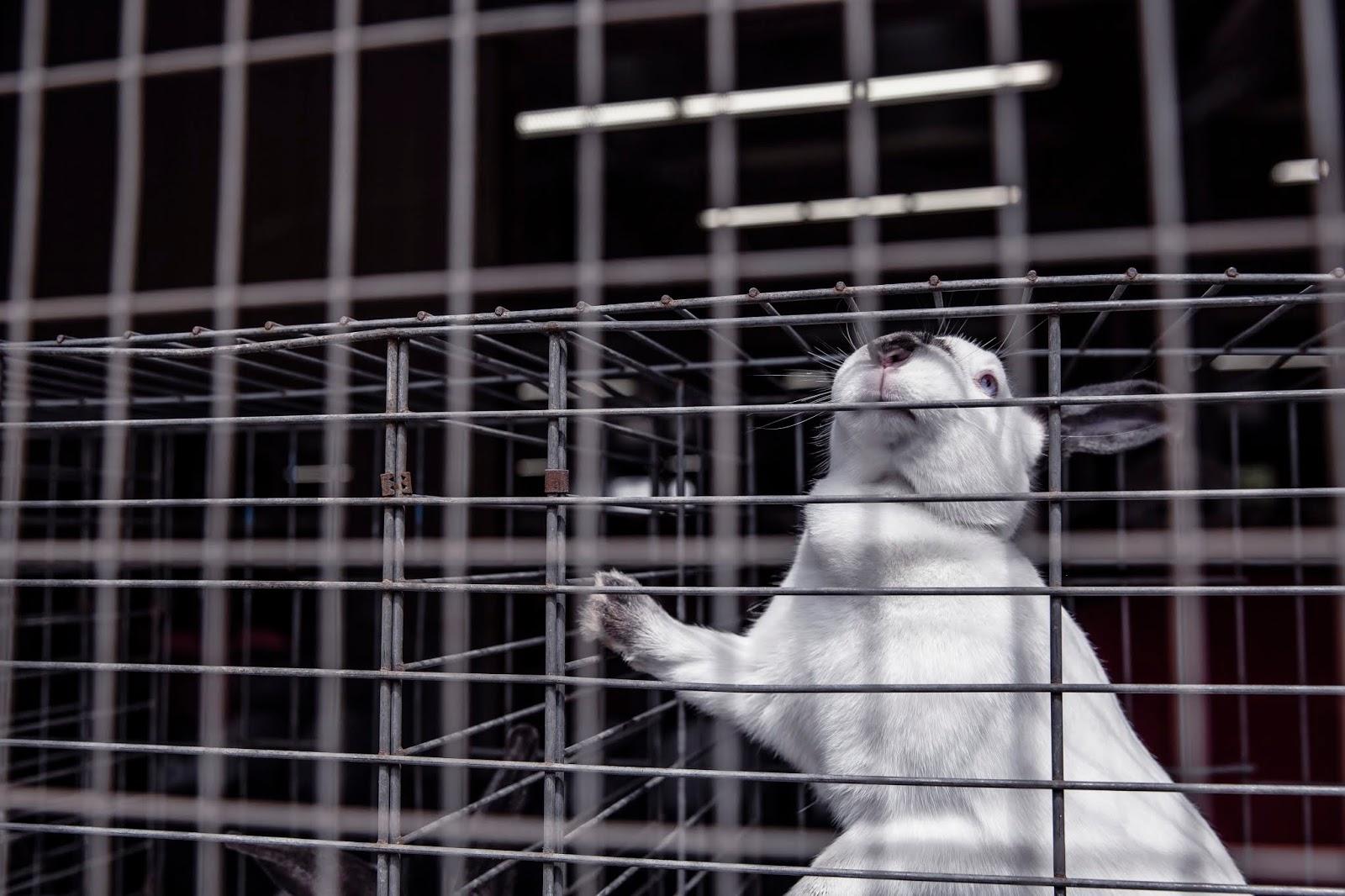 kosmetyki testowane na zwierzętach, marki które testują kosmetyki na zwierzętach