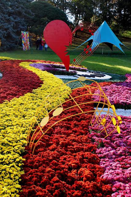 Разноцветные хризантемы на Певческом поле