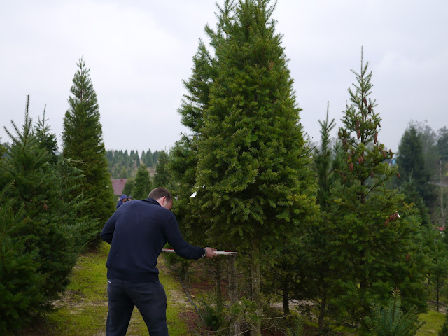 Little Hiccups Christmas Tree Hunting