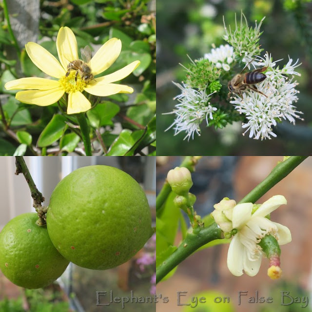 Happy bees and limes